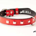 accessori cane collare