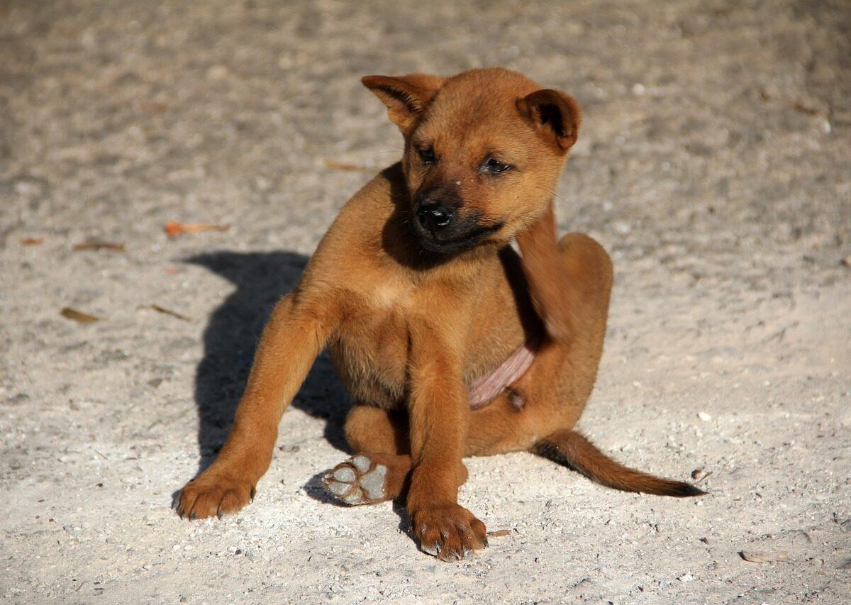 dog-1559746_1280