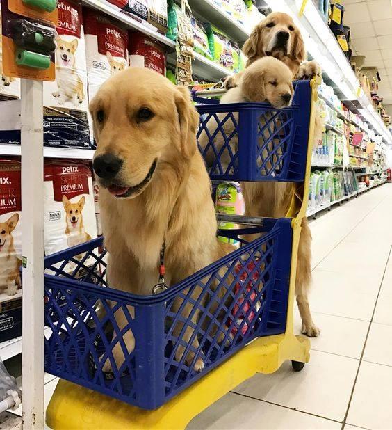 cani supermercato