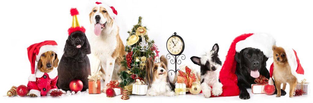 Animali Natale Immagini.La Leggenda Di Natale Dela Shop