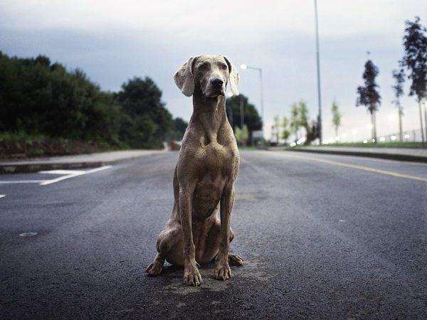 avvicinarsi a un cane