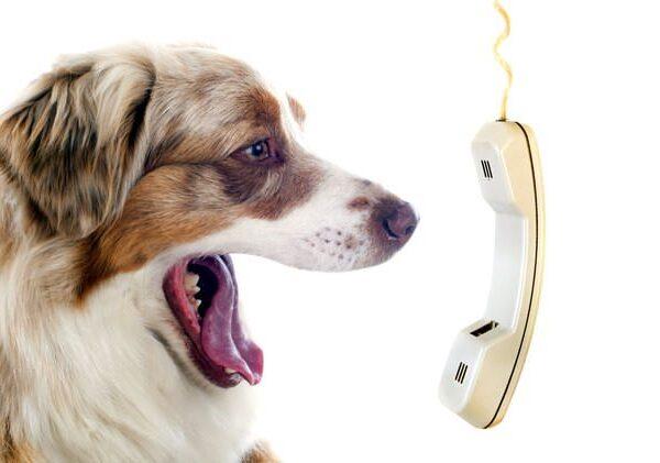 parlare con il cane