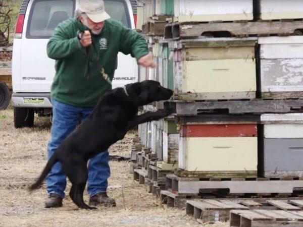 cani che aiutano