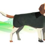 cappottino beagle