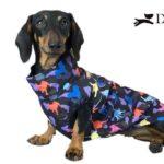 impermeabile per cane bassotto