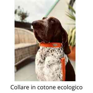 collare in cotone