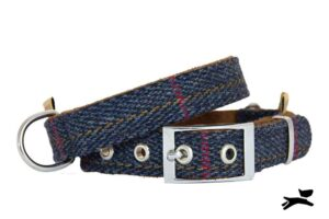 collare tweed blu