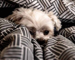 cane trema per paura