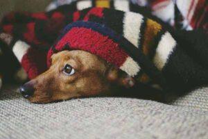 cane senza sottopelo