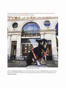dogsportal-eleganza-dela2
